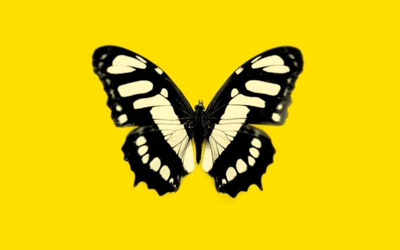 Mambrini <small>| Butterfly Voyage</small>